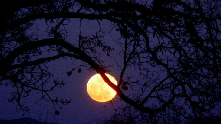 An orange full moon behind a tree branch