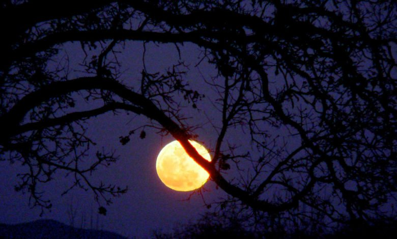 An orange full moon behind a tree branch
