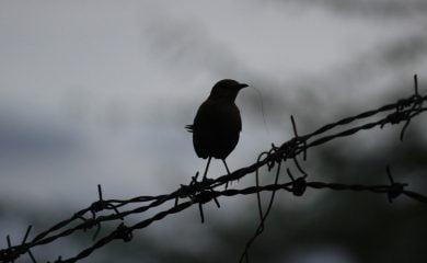 a black bird sitting on a tree branch