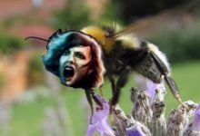 Photo of Zombie Bees Are Coming To Get You, Barbara!