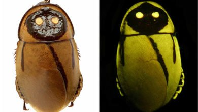 Photo of Just What The World Needed: A Glow-In-The-Dark Cockroach