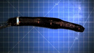 Photo of Scientists Create Autonomous Earthworm Robot