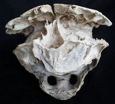 Alien Skull Found In Bulgaria