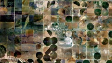 "Photo of Google Maps Anomalies: ""Crop Circles"""