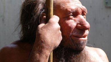 Photo of Woman Sought To Be Surrogate For Neanderthal Clone