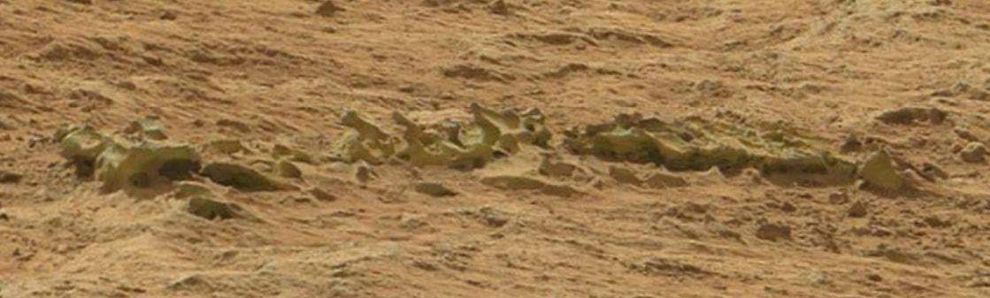Vertebrae On Mars?