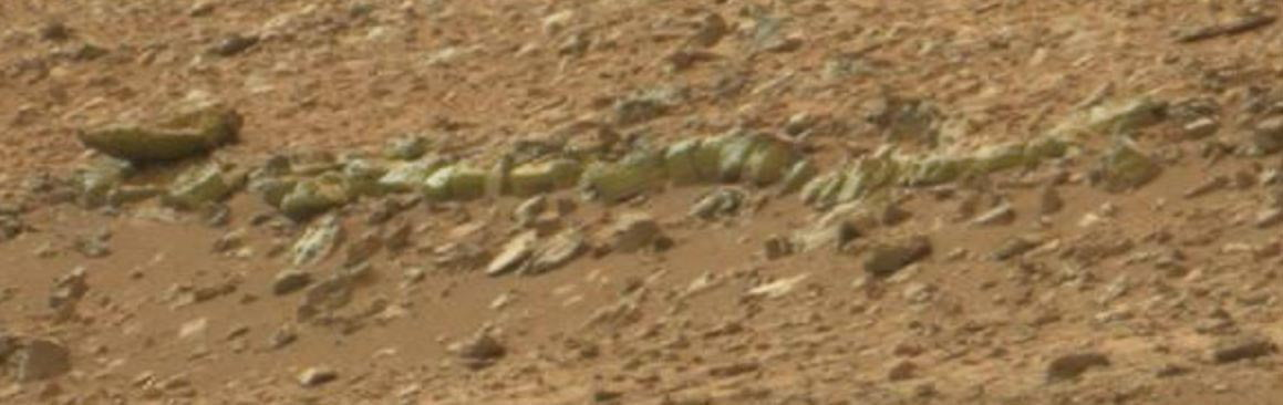 Mars Vertebrae?