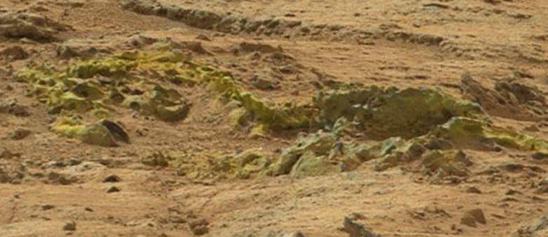 Vertebrae Found On Mars?