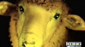 Glow-In-The-Dark Sheep? Sure, why not?