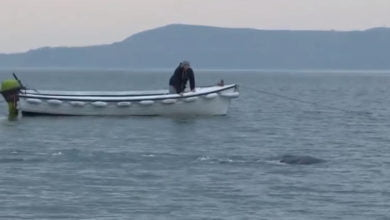 "Photo of Unidentified ""Creature"" Caught On Film In Lough Foyle"