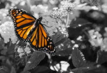 Photo of Monarch Programming and Mind Control