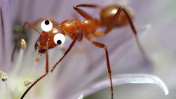 "They're Crazy, They're Ants: ""Crazy Ants"" Invade Southeast U.S."