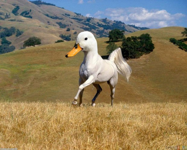 duck-horse