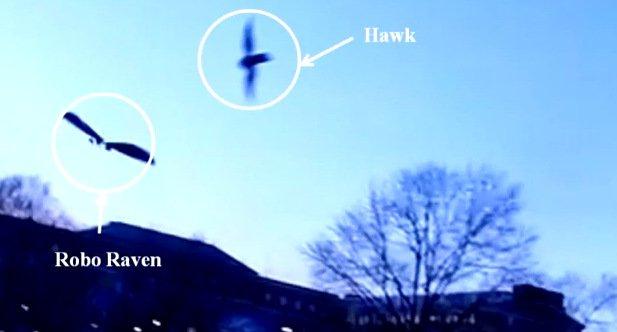 robo-raven-hawk