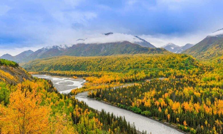 Orange trees in Anchorage, Alaska