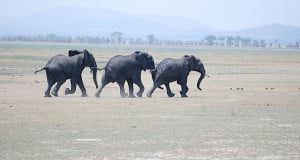Infrasound and Elephants
