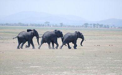 Infrasound and Elephants