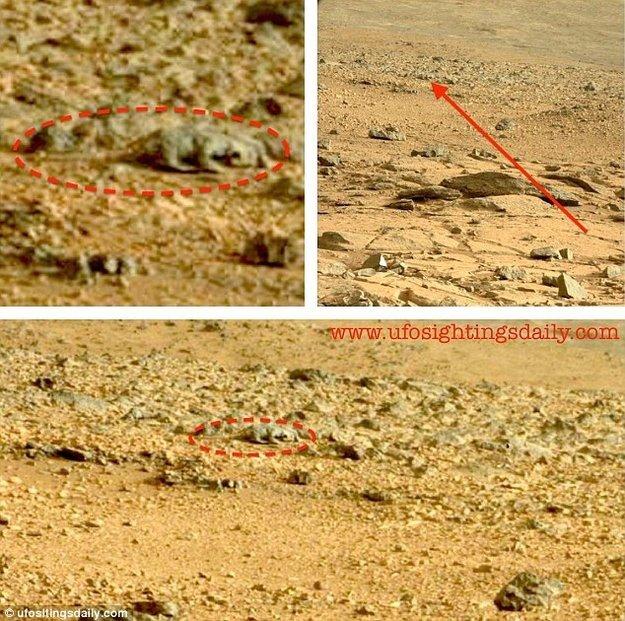 lizard-on-mars1