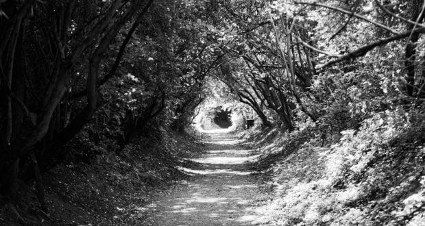 forest-gateway