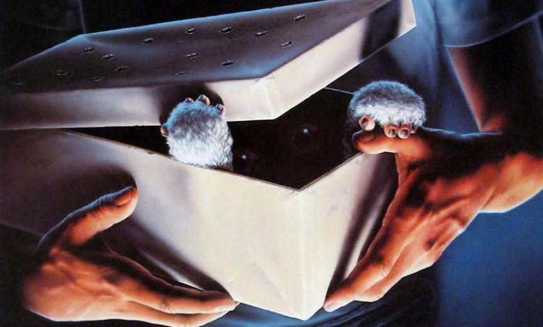Photo of What to Do If You Receive a Mogwai for Christmas