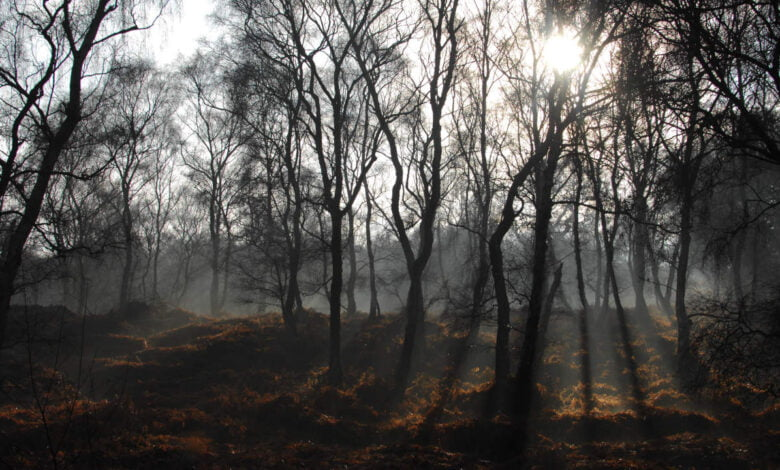 A foggy forest in Cannock Chase, United Kingdom
