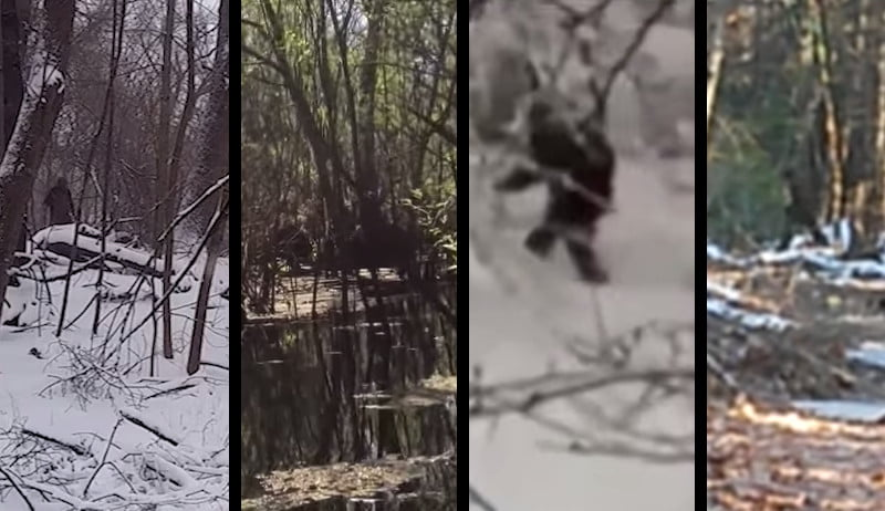 4 alleged bigfoot sightings with videos from january 2015