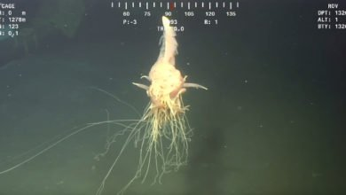 "Photo of BP Crew Videotapes Spaghetti-like ""Monster"" Near Angola"