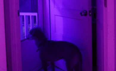 A dog looks outside, wondering -- did it see a ghost?