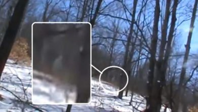 "Photo of Mysterious ""White Bigfoot"" Sighting In January 2016"