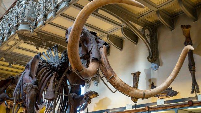 Woolly Mammoth!