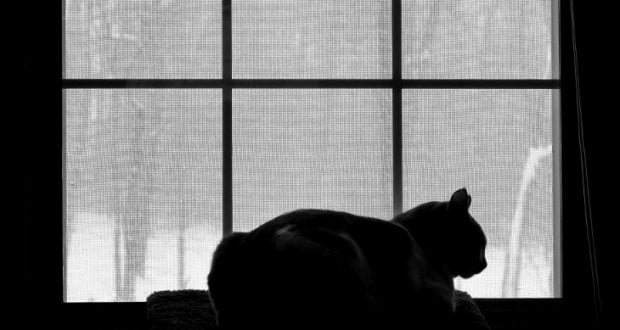 Can Cats Journey Into Other Dimensions?