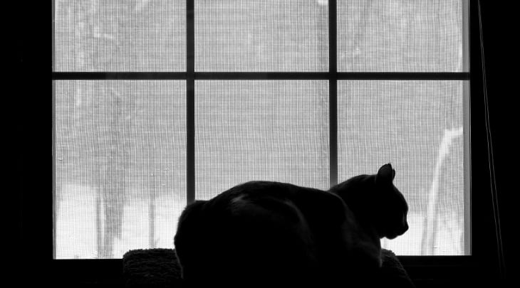 A cat sits at a window. Can it journey Into other dimensions?