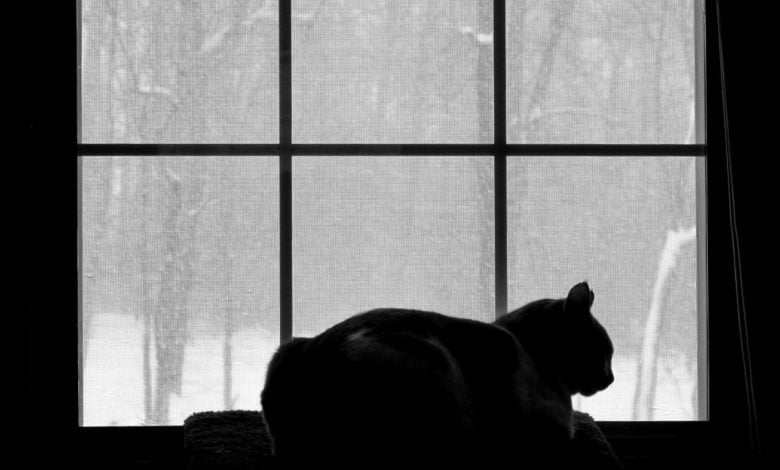 A cat sits on a windowsill