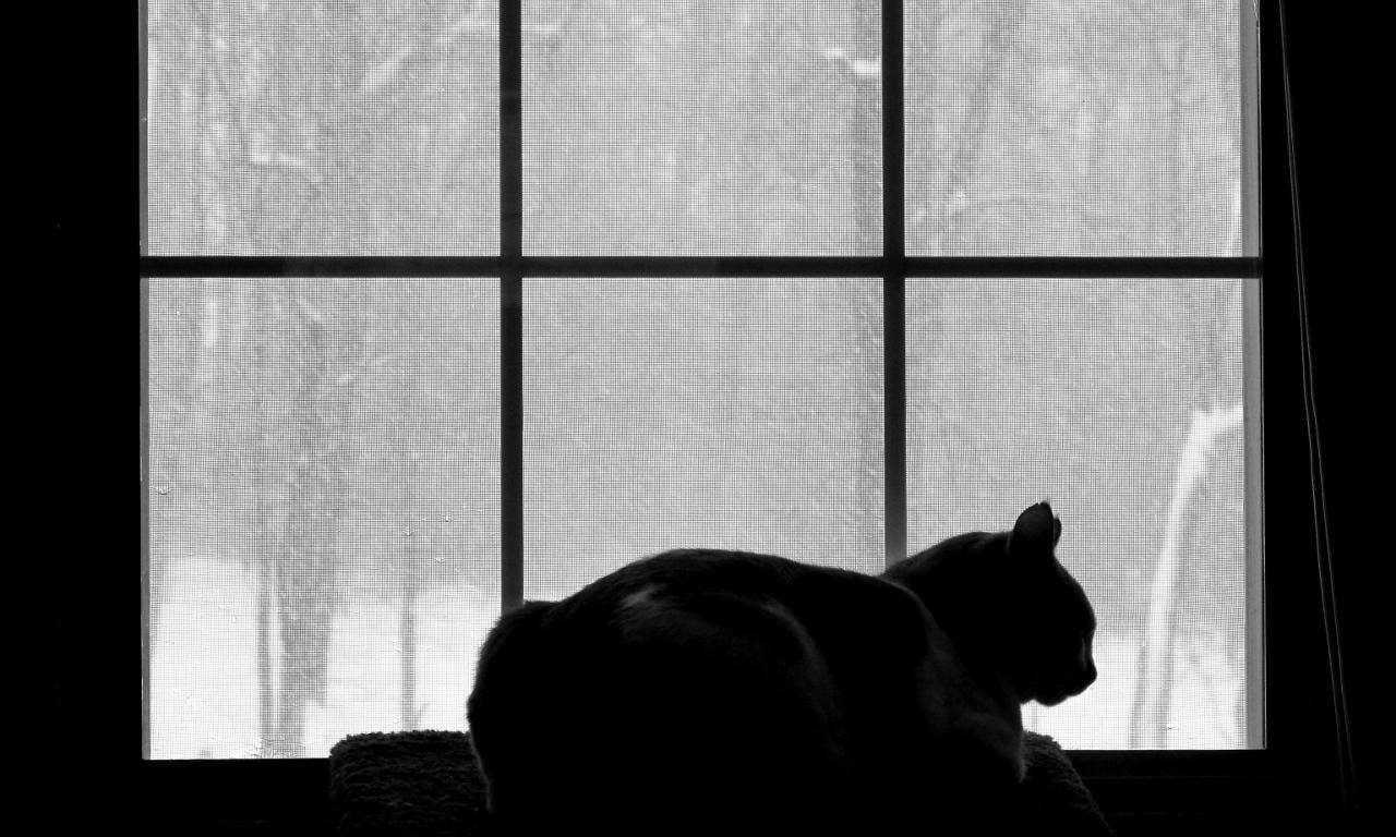 A cat sits on a windowsill