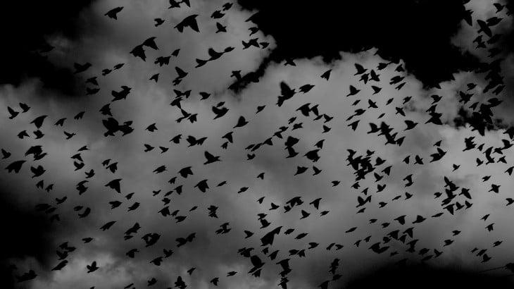 Birds flying in a nightmare