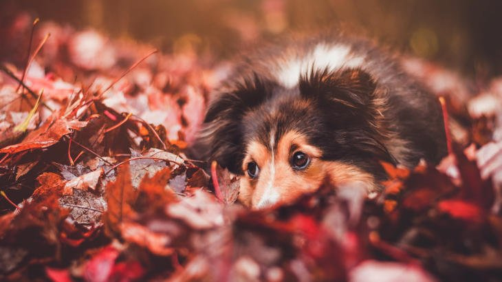 A dog sits in the leaves