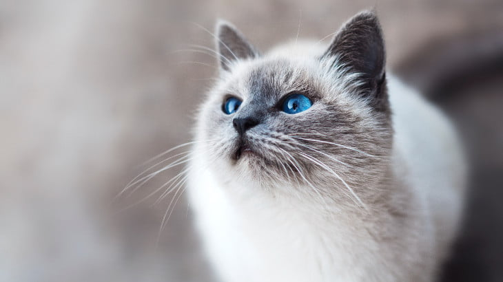 5 Signs A Ghost Cat Is Haunting You Right Now