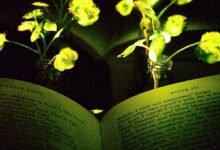 Photo of MIT Engineers Create Glowing Plants With Nanobionics