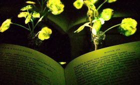 MIT Engineers Create Glowing Plants With Nanobionics