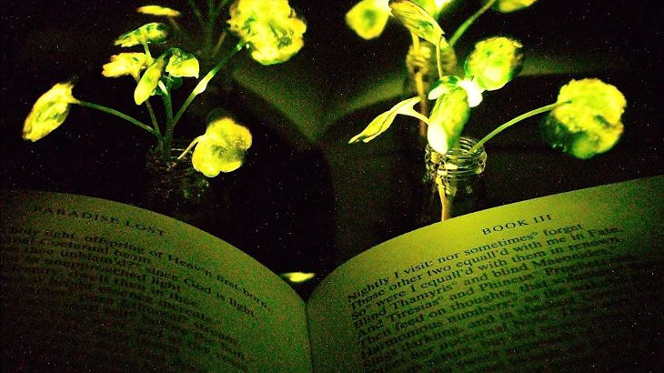 MIT Engineers Create Glowing Plants With Nanobionics