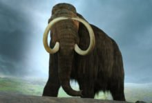 Photo of Woolly Mammoth Sightings – Are These Prehistoric Creatures Still Alive?
