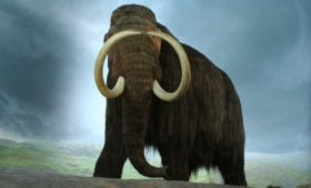 Woolly Mammoth Sightings – Are These Prehistoric Creatures Still Alive?