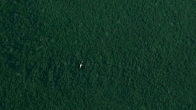 Photo of Google Maps Anomalies: A Plane in the Jungle