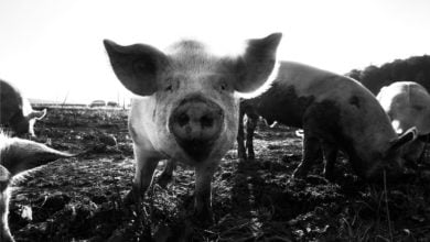 "Photo of A Classic Demonic EVP: ""I have the body of a pig."""