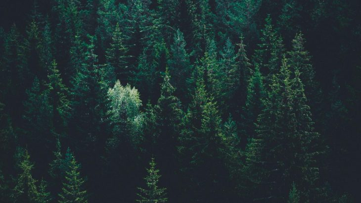 A forest from above