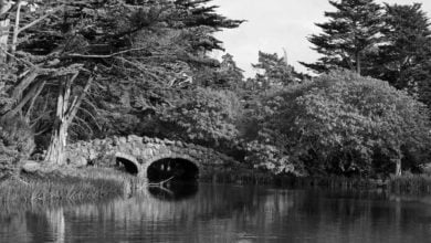 Photo of The Ghostly White Lady of Stow Lake