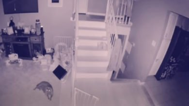 Photo of Alleged 'Ghost' and Ghost Dog Captured On Home Security Camera