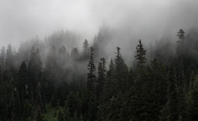 A dense fog covers a forest