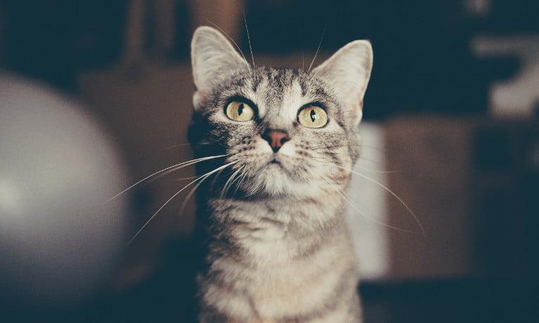A cat ignoring you. So, a cat.