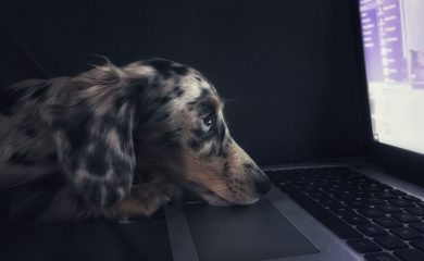 A dog searches online for information about ghosts